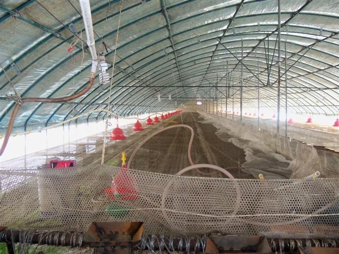 肉鸡 日光温室 发酵床养猪大棚 养猪棚 钢架养殖 养殖棚 猪舍 懒汉养猪棚