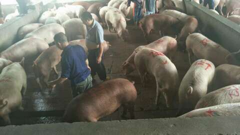 四川省宜宾市南溪县求购内三元生猪
