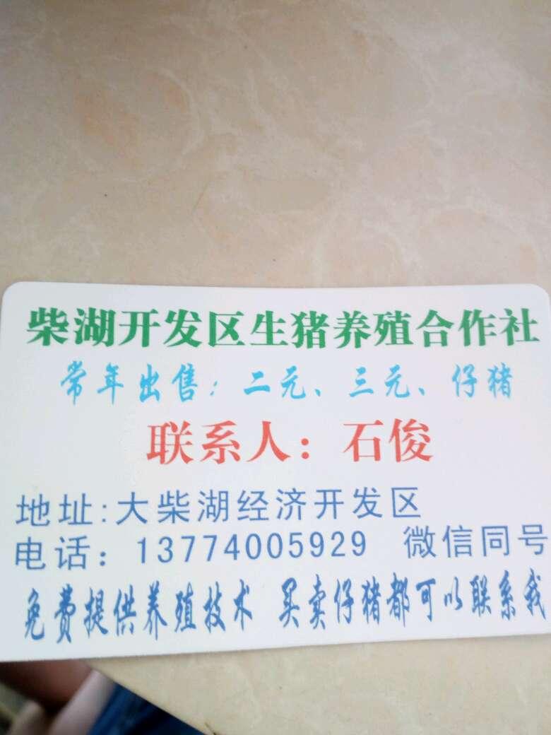 湖北省荆门市钟祥市供应10~15kg仔猪