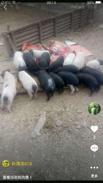 辽宁省供应10~15kg仔猪
